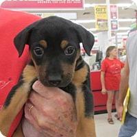 Adopt A Pet :: Pixie - Rocky Mount, NC