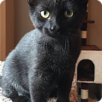 Adopt A Pet :: Bert - Des Moines, IA
