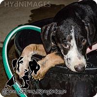 Adopt A Pet :: Huck - Goodlettsville, TN