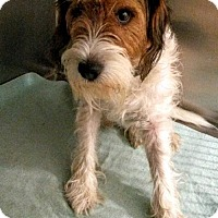Terrier (Unknown Type, Medium) Dog for adoption in Colfax, Illinois - Charlie