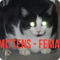 Adopt A Pet :: WATSON - Glendale, AZ