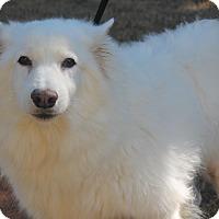 Adopt A Pet :: Beavis - East Dover, VT