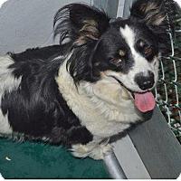 Adopt A Pet :: petra - Midvale, UT