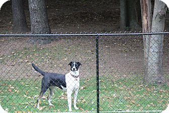 Border Collie/Husky Mix Dog for adoption in Colborne, Ontario - Shelby