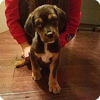 Adopt A Pet :: Hugo - Jacksonville, FL