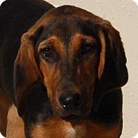 Adopt A Pet :: Macy - Toccoa, GA