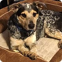 Adopt A Pet :: Marty - Harrisonburg, VA