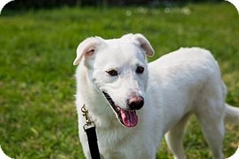 Shepherd (Unknown Type)/Spitz (Unknown Type, Medium) Mix Dog for adoption in Austin, Texas - Ava