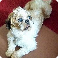 Adopt A Pet :: Raffi - Jacksonville, FL