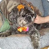 Adopt A Pet :: Jing Jing - Encinitas, CA