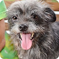 Adopt A Pet :: Sissy - Ocala, FL