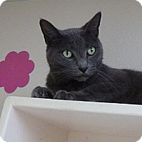 Adopt A Pet :: Smokey - St. Petersburg, FL
