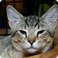 Adopt A Pet :: Banjo - Sacramento, CA