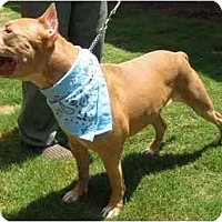 Adopt A Pet :: J-Lo - Conyers, GA