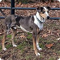 Adopt A Pet :: Dante - Richmond, VA