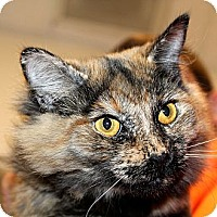 Adopt A Pet :: Chloe - Greenville, SC