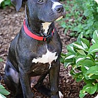 Adopt A Pet :: Jagger - Woodbridge, CT