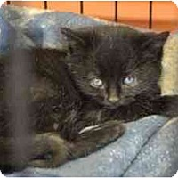 Adopt A Pet :: Blizzard--adopted! - New Richmond, OH