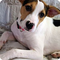 Adopt A Pet :: Kylie - Knoxville, TN