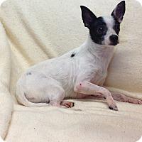Adopt A Pet :: Domino - Phoenix, AZ