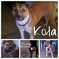 Adopt A Pet :: Koda - Wichita, KS