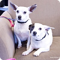 Adopt A Pet :: Ellie & Ava - Knoxville, TN