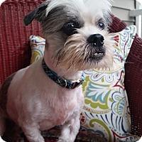 Adopt A Pet :: Winston - Fennville, MI