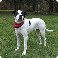 Adopt A Pet :: Sonora - Mocksville, NC