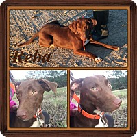 Adopt A Pet :: Reba IN CT - East Hartford, CT