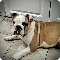 Adopt A Pet :: Anastasia - Newark, DE