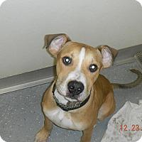 Adopt A Pet :: RYDER - Sandusky, OH