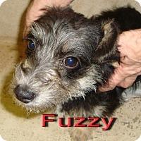 Adopt A Pet :: Fuzzy - Coleman, TX