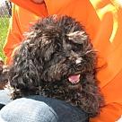 Adopt A Pet :: BARBIE DOLL