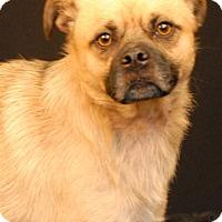 Adopt A Pet :: Milo - Newland, NC
