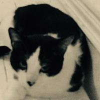 Adopt A Pet :: Jojo - Montreal, QC