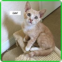 Adopt A Pet :: Levi - Miami, FL