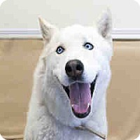 Adopt A Pet :: Ondi - Agoura, CA