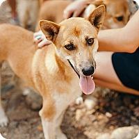 Adopt A Pet :: Hooch - Denver, CO