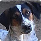 Adopt A Pet :: Specs