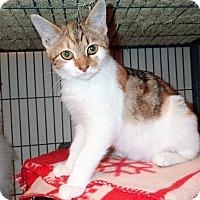 Adopt A Pet :: Autumn - North Wilkesboro, NC
