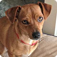 Adopt A Pet :: Noel - Sunnyvale, CA