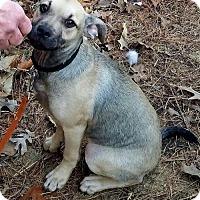 Adopt A Pet :: Joe Henry - Little Rock, AR