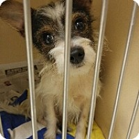 Adopt A Pet :: Fetch - Kenner, LA
