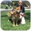 Photo 2 - Chow Chow/Collie Mix Dog for adoption in Marina del Rey, California - Ava
