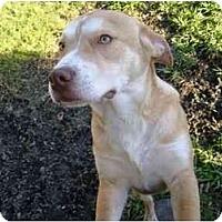 Adopt A Pet :: Nitro - Wylie, TX
