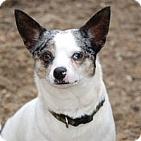 Adopt A Pet :: Huey - Virginia Beach, VA
