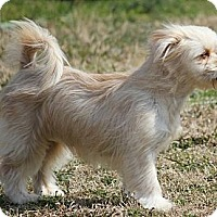 Adopt A Pet :: *Lindsey - PENDING - Westport, CT
