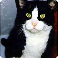 Adopt A Pet :: Boots - Medway, MA