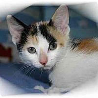 Adopt A Pet :: Mimsy - Montgomery, IL