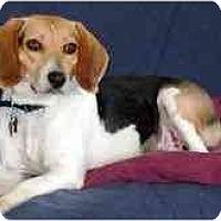 Adopt A Pet :: Sage - Novi, MI